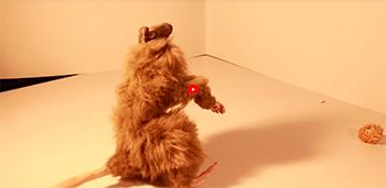 upoutávka videa Tanec